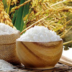 Gạo Lài Sữa túi 5kg