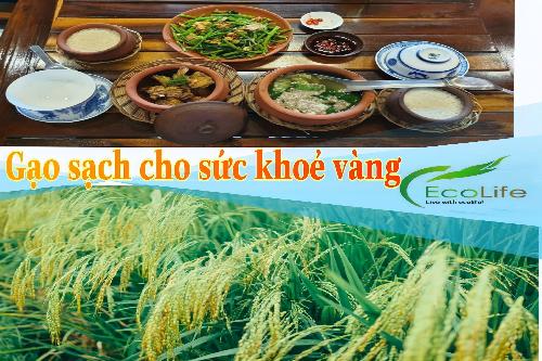Tổng đại lý gạo ST25 miền Bắc cung cấp gạo sạch online