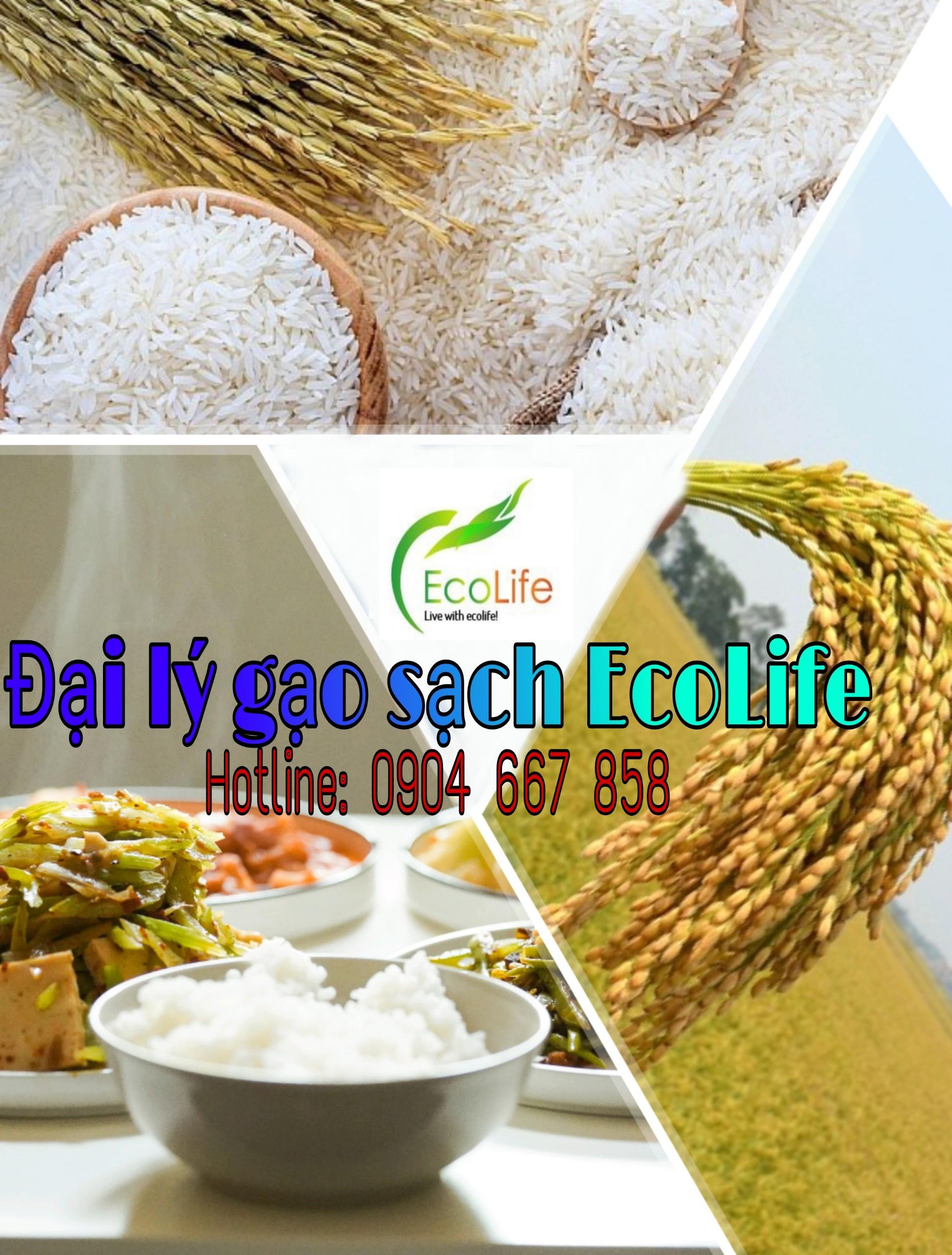 Đại lý gạo st25 tại Hà Nội - EcoLife