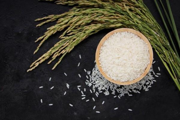 Đại lý gạo sạch EcoLife cung cấp gạo uy tín, giá rẻ