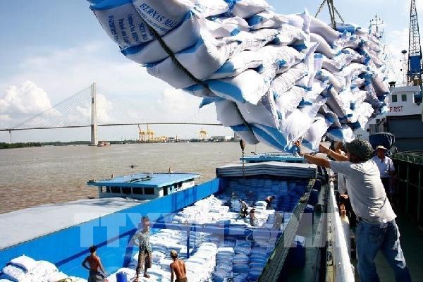 Gạo ST25 ngon nhất thế giới xuất khẩu sang Châu Âu
