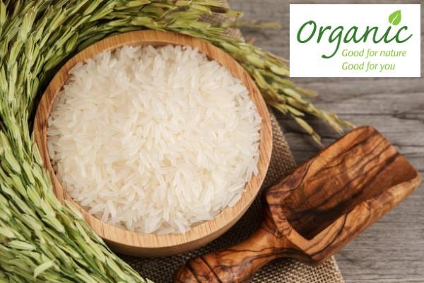 Lợi ích của việc sản xuất gạo ST25 hữu cơ