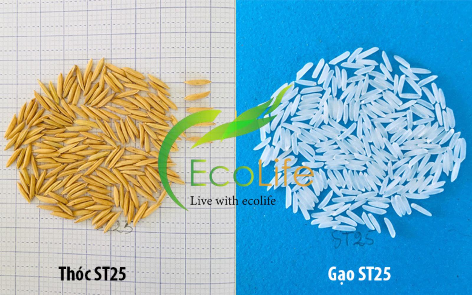 Hình dáng lúa và gạo ST25