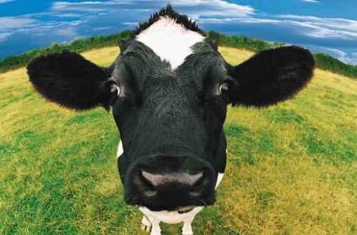 Sữa organic là gì? Công dụng của sữa organic