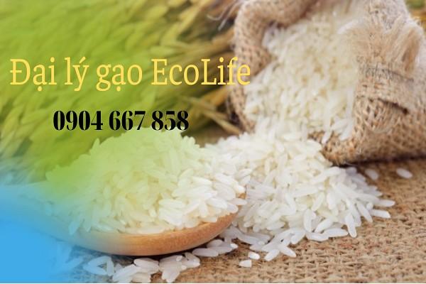 Dịch vụ mua gạo online - giao gạo tại nhà đang ngày càng trở nên phổ biến hơn.LIên hệ ngay EcoLife qua hotline 0904 667 858 mua hàng nhanh chóng và tiện lợi nhất.