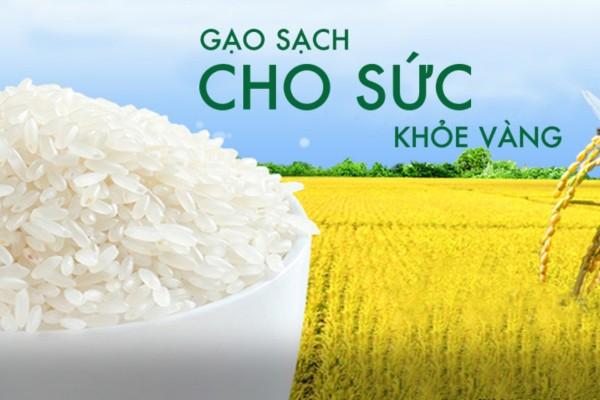 Đại lý gạo EcoLife- gạo sạch cho sức khỏe vàng