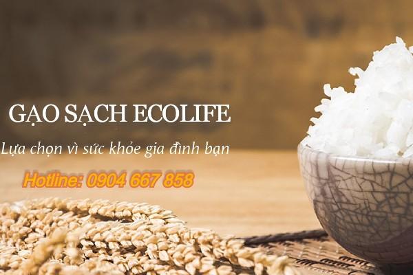 Đại lý gạo quận 2 EcoLife mang đến những bữa ăn chất lượng cho gia đình bạn