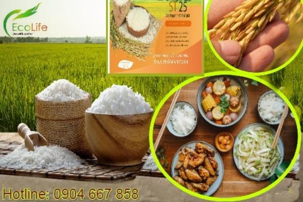 EcoLife-  gạo sạch cho sức khỏe vàng