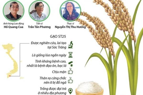 Nhóm các nhà khoa học đã lai tạo thành công gạo ST25 ngon nhất thế giới.