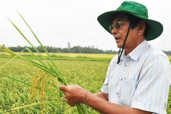 Kỹ sư Hồ Quang Cua - cha đẻ của dòng lúa thơm ST lừng danh