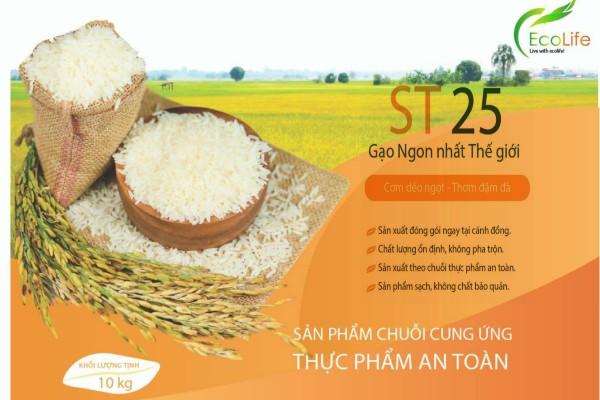 EcoLife đại lý gạo ST25 tại thành phố Hồ Chí Minh đáng tin cậy nhất