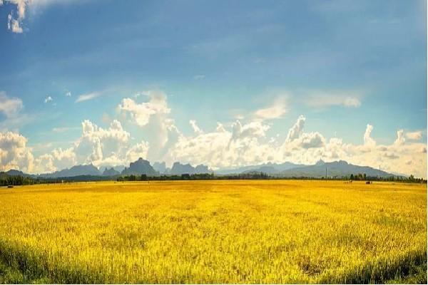 EcoLife trực tiếp thu mua lúa từ cánh đồng của người nông dân, sản xuất với dây chuyền công nghệ hiện đại. Bởi vậy mà cắt giảm được nhiều chi phí trung gian, chi phí logistics,...