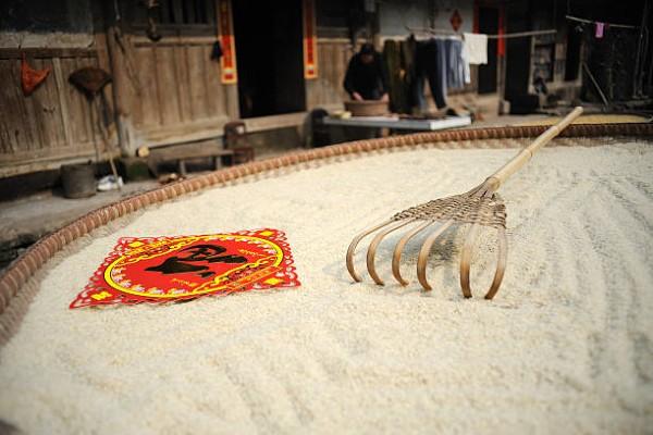 Phơi nắng để xử lý gạo bị mọt